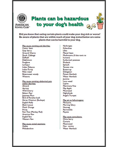 Texas-Trace-articles-plants-can-be-hazardous