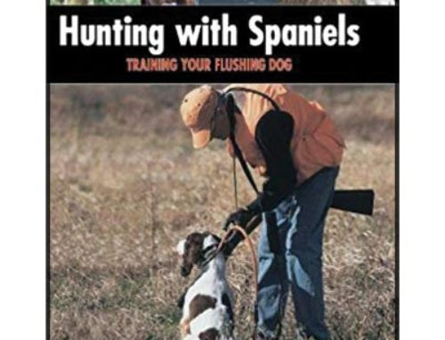 Hunting with Spaniels – Training Your Flushing Dog