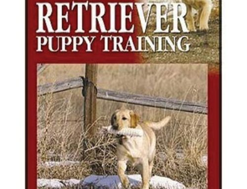 Retriever Puppy Training The Right Start for Hunting