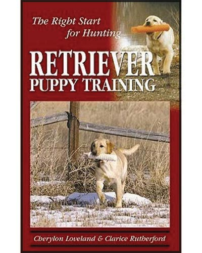 Texas-Trace-recommend-Retriever-Puppy-Training-for-Hunting